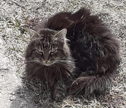 Kissa Mouruaa